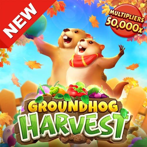 groundhog-harvest_web_banner_500_500_en